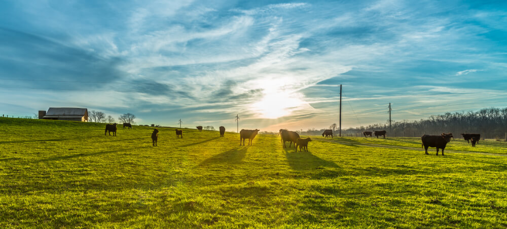 astrocast-iot-farming-livestock